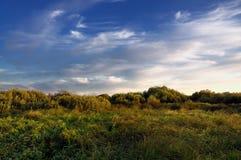 Herbstlandschaft im Sumpf Stockbilder