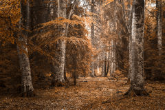 Herbstlandschaft im Wald Stockbild