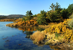 Herbstlandschaft in Irland Stockfoto