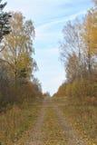 Herbstlandschaft: Landstraße zwischen gelben Birken Stockbild