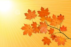 Herbstlandschaft mit Ahornbaum stock abbildung