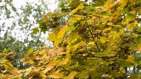 Herbstlandschaft mit Bäumen und Blättern Stockfotografie