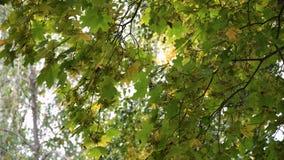 Herbstlandschaft mit Bäumen und Blättern Stockfoto