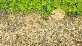 Herbstlandschaft mit Baum lässt das Schwimmen auf einem Teich stock video
