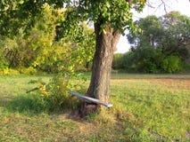 Herbstlandschaft mit Baum und Bank im Garten stockfotos