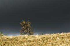 Herbstlandschaft mit Baum und stürmischem Himmel Lizenzfreie Stockbilder