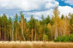 Herbstlandschaft mit Birken Stockbilder