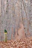 Herbstlandschaft mit Buchenwaldbahn und -signal spanien Lizenzfreies Stockfoto