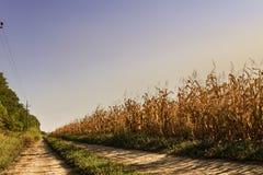 Herbstlandschaft mit dem Goldmaisfeld Stockbild