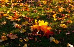 Herbstlandschaft mit der Sonne, die warm ein Blatt eines mapl erhellt lizenzfreie stockfotografie
