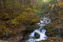 Herbstlandschaft mit einem Wasserfall auf The Creek taiga. Lizenzfreies Stockbild
