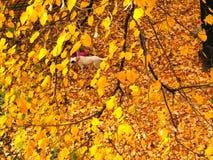 Herbstlandschaft mit einer kleinen Zahl eines Kindes Gelbblätter eines Baums Stockfoto
