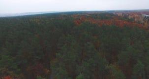 Herbstlandschaft mit einer Landstraße unter den Oberteilen Kiefern und Laubbäumen stock video footage