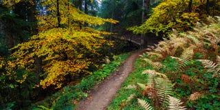 Herbstlandschaft mit einer Spur im Wald Lizenzfreie Stockbilder