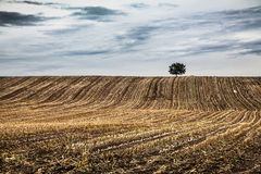 Herbstlandschaft mit einsamem Baum und drastischen Wolken lizenzfreie stockfotografie