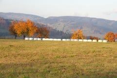 Herbstlandschaft mit gelb-orangeen Bäumen Stockfotografie