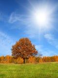 Herbstlandschaft mit gelbem Baum Lizenzfreies Stockfoto