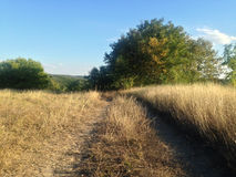 Herbstlandschaft mit gelbem Gras und grünen Bäumen Stockfoto
