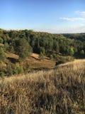 Herbstlandschaft mit gelbem Gras und grünen Bäumen Stockfotografie