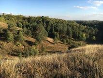 Herbstlandschaft mit gelbem Gras und grünen Bäumen Lizenzfreie Stockbilder