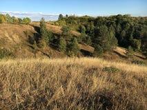 Herbstlandschaft mit gelbem Gras und grünen Bäumen Lizenzfreies Stockfoto