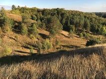 Herbstlandschaft mit gelbem Gras und grünen Bäumen Stockbild