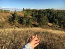 Herbstlandschaft mit gelbem Gras und grünen Bäumen Lizenzfreie Stockfotografie