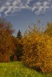 Herbstlandschaft mit grünem Gras des blauen Himmels Stockbilder