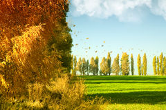 Herbstlandschaft mit grünem Weizenfeld stockfotografie
