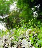 Herbstlandschaft mit Gras. stockfotos