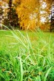 Herbstlandschaft mit Gras. stockfoto