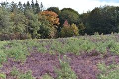 Herbstlandschaft mit vielen verschiedenen Farben dieses kann in e gesehen werden lizenzfreie stockfotografie