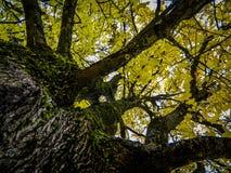 Herbstlandschaft in Mittel-Russland Stockfotos