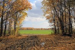 Herbstlandschaft in Russland Stockfoto