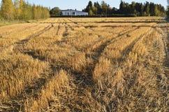 Herbstlandschaft, schräges Feld Stockfotos