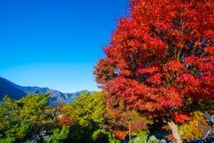 Herbstlandschaft von Japan Stockbild
