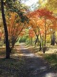 Herbstlandschaft - Weg in einem Mischwald Stockbild