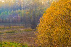 Herbstlandschaftsansichtfeldholz-Fallfarben Stockfotos