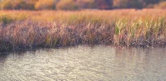 Herbstlandschaftsflussbank der Fahne deckt trockenes Gras der natürlichen unscharfen Hintergrund des selektiven Fokus der Wassern lizenzfreie stockfotos