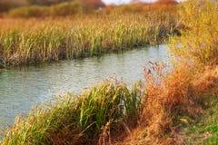 Herbstlandschaftsflussbank der Fahne deckt trockenes Gras der natürlichen unscharfen Hintergrund des selektiven Fokus der Wassern lizenzfreie stockfotografie
