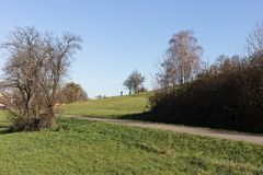 Herbstlandschaftslandschaft mit deadfallen Bäume und blauen Himmel Lizenzfreie Stockbilder