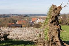 Herbstlandschaftslandschaft mit deadfallen Bäume und blauen Himmel Lizenzfreies Stockfoto