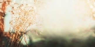Herbstlandschaftsnaturhintergrund Trockenblumen mit Wasser fällt nach dem Regen auf dem Feld, Fahne Stockbilder
