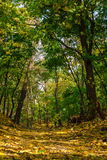 Herbstlandschaftssonniger Tag im Wald Stockfotografie