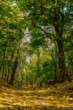 Herbstlandschaftssonniger Tag im Wald Stockbilder
