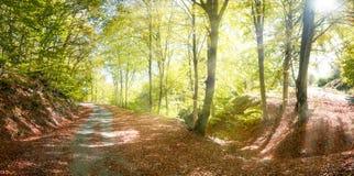 Herbstlandstraße mit Sonnenstrahlen Stockfotos