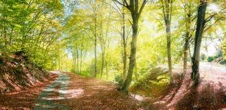 Herbstlandstraße mit Sonnenstrahlen Stockfoto
