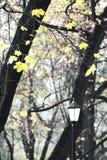 Herbstlaterne in der Gasse Lizenzfreie Stockbilder