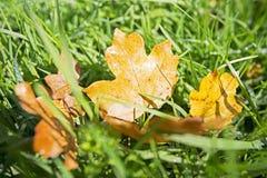 Herbstlaub über Gras im Wald Stockfotografie
