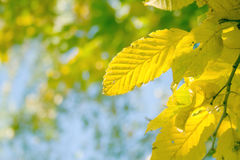 Herbstlaub Lizenzfreie Stockfotos